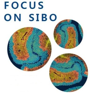 155-focus-on-sibo-290×300